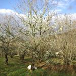 Aide à la plantation d'arbres truffiers