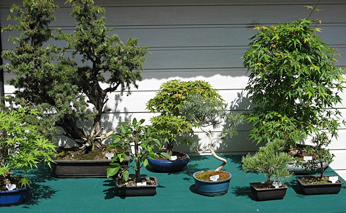 bonzai-plantes-rares-bezouotte-2011