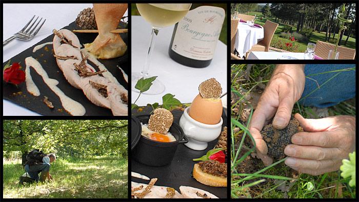 Démontration cavage et dégustation de la truffe de bourgogne - restaurant du golf de norges la ville près de dijon