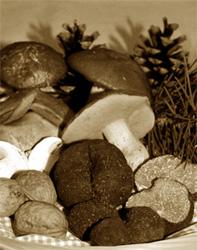 Histoire de la truffe