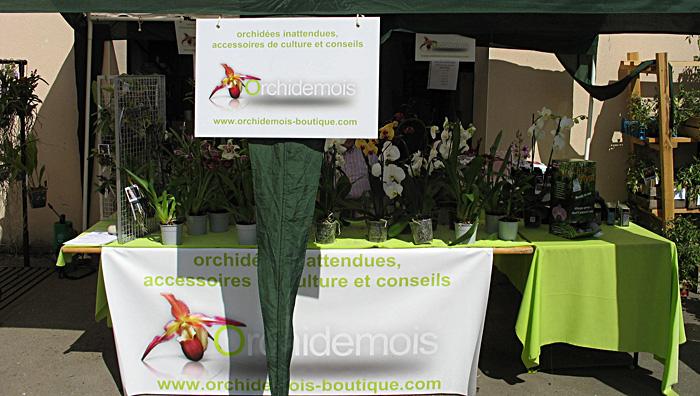orchidees-foire-plantes-rares-2011