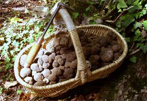 Panier de Truffes de Bourgogne