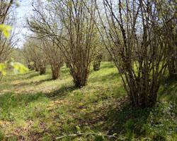 le redémarrage et bourgeonnage de printemps