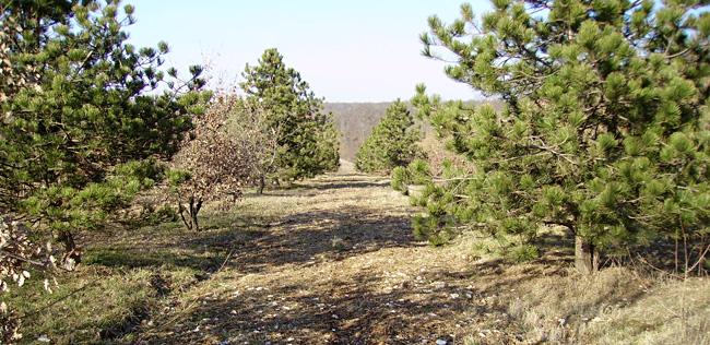 Plantation truffière suivie par Aux Deux Caveurs