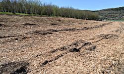 La surface prête au travail du sol avant plantation des nouveaux arbres