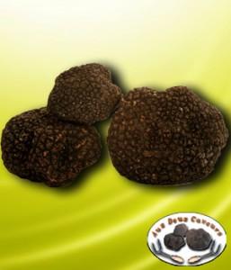 truffes-bourgogne-fraiches