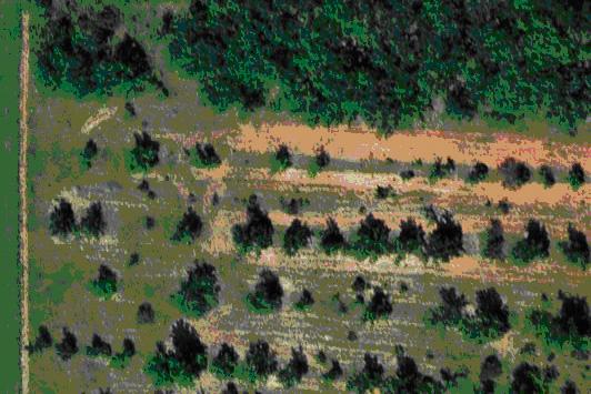 Le danger des bordures de bois en plantation truffière