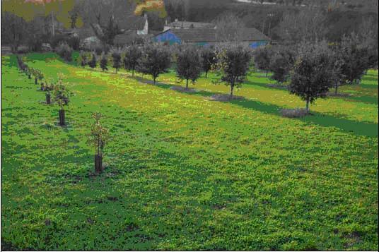 La valeur de l'écosystème dans la plantation truffière