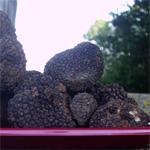 vente-truffes-de-bourgogne