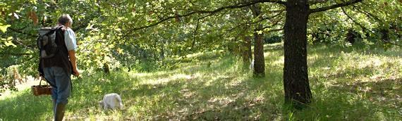Formation – créer une plantation truffière, quels plans et comment planter