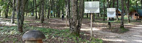 Marey-lès-Fussey accueille la maison aux mille truffes et champignons
